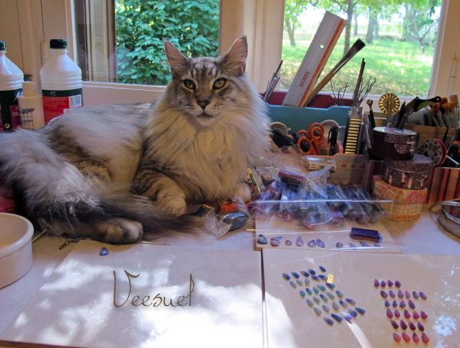 Un chat en plein effort pour me soutenir dans mon travail